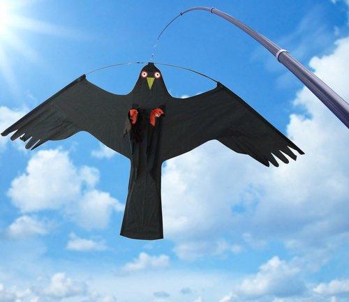 - Fugleskræmsel, Dragen