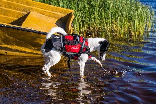 Crewsaver - PetFloat Redningsvest for hund