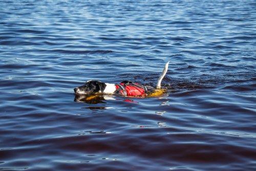Crewsaver - Hundflytväst